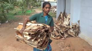 Areca Leaf plates making/Banana fibre extraction/Banana mat/coirpot making