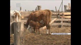 Фермер возрождает деревню (Новости 25.04.16)