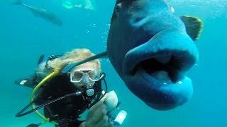 getlinkyoutube.com-GIGANTIC FISH!