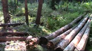 getlinkyoutube.com-A Lumbercamp Bigfoot Kill