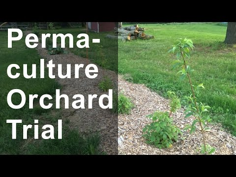 Permaculture Orchard Trial
