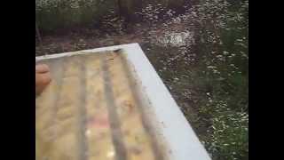 Пчелы в жару в ульях из эппс.