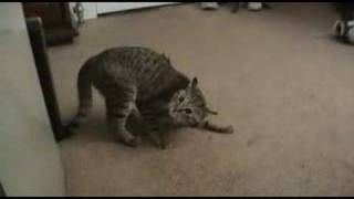 getlinkyoutube.com-Cat with awful gas