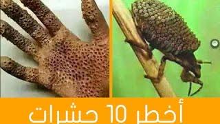 getlinkyoutube.com-اخطر 10 حشرات  فى العالم