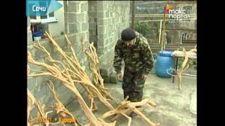 getlinkyoutube.com-Из обычных лесных коряг рождаются произведения искусства