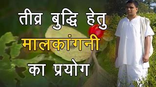 getlinkyoutube.com-Ayurvedic Benefits of Malkangani for Sharp Mind   Acharya Balkrishna