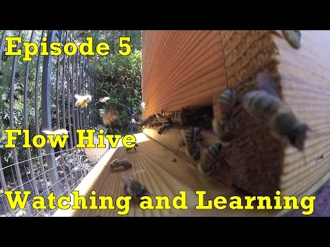 Flow Hive - Episode 5 - Watching and Learning