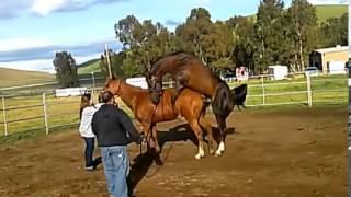 horse breeding width=