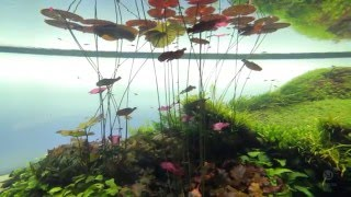 getlinkyoutube.com-Forest Underwater by Takashi Amano