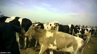 getlinkyoutube.com-جولة في سوق قطور - الجزء الأخير