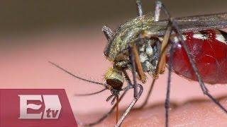 """Estos son los síntomas del virus llamado """"Zika"""" / Ricardo Salas"""