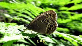 getlinkyoutube.com-검은나비채빈님