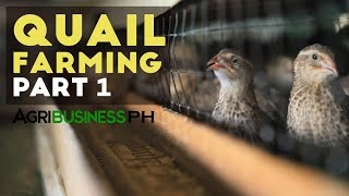 getlinkyoutube.com-Quail Farming Part 1 : How to Start Quail Farming Business | Agribusiness Philippines