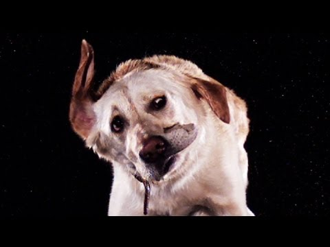 Wet animals shake in slow motion - Slo Mo #6 - Earth Unplugged