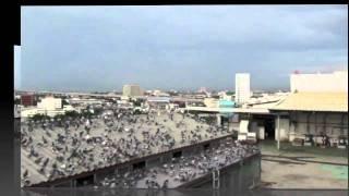 Thailand Grand Pigeon Race: Loft Training