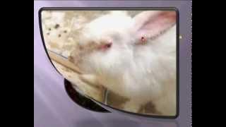 getlinkyoutube.com-أخطر 3 أعداء فى تربية الأرانب