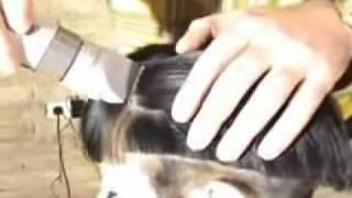 getlinkyoutube.com-haircut.hu_superb haircut and shave