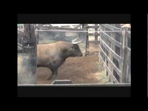 Encierro, aparte y embarque de toros para sincelejo 2013 - Ganaderia San Fermin