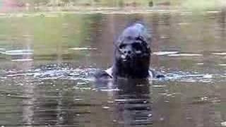 getlinkyoutube.com-Sasquatch  Bigfoot Attack (Part 1)
