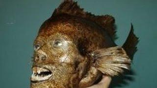 getlinkyoutube.com-人間のような顔をした動物たち