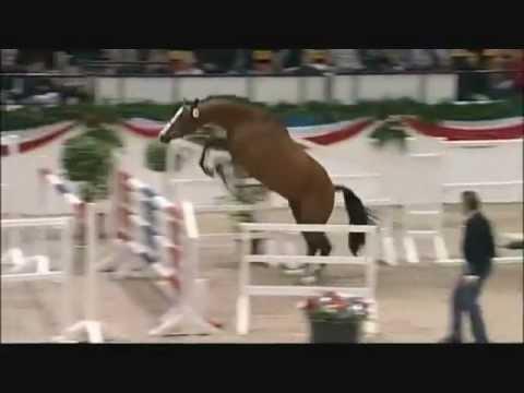 CASCADELLO: Holstein stallion da Casall La Silla, www.equine-evolution.com stallone da monta