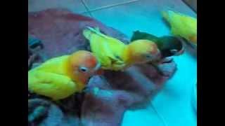 getlinkyoutube.com-การป้อนอาหารลูกนก เเบบถูกวิธี !!