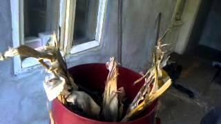 getlinkyoutube.com-mlevenje kukuruzovine