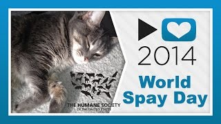 HSUS - World Spay Day | #p4a 2014