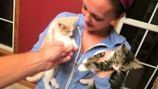 RESCUED SICK KITTENS!!