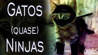 Gatos Mais Engraçados - Ninjas (Funny Cats)