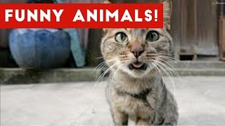 Funniest Animal Bloopers & Outtakes Compilation January 2017 | Funny Pet Videos