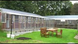 Tumley Lofts Pigeon Breeding and Racing Stud tour pt 1