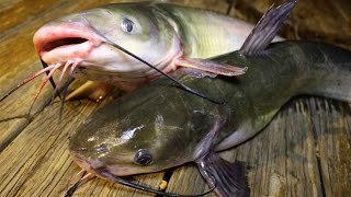 getlinkyoutube.com-How to catch catfish - How to cook catfish - How to clean catfish