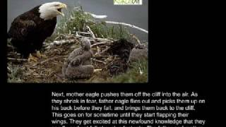 getlinkyoutube.com-The Seven Principles of an Eagle