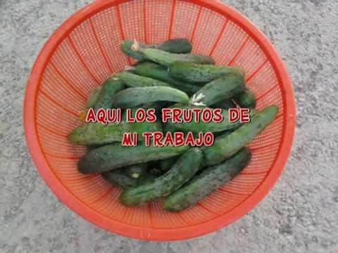 Huerto Casero,abono organico