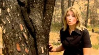 ΘΕΟΔΩΡΟΣ ΚΟΛΟΚΟΤΡΩΝΗΣ - ΣΚΑΪ - ΜΕΓΑΛΟΙ ΕΛΛΗΝΕΣ - 2009 (HQ)