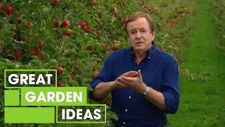 getlinkyoutube.com-Better Homes and Gardens - How to grow an apple tree