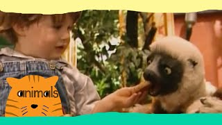 Zoboomafoo - Playtime (Full Episode)