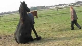 getlinkyoutube.com-Les chevaux en pleine action