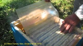 Эффективный Улей Пчеловода Василия Приятеленко в Украине
