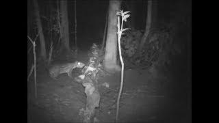 getlinkyoutube.com-Animais silvestres IV - Paca enorme no saleiro