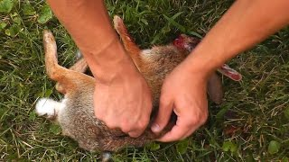 getlinkyoutube.com-[GRAPHIC] Rabbit Headshot with Recurve Bow!