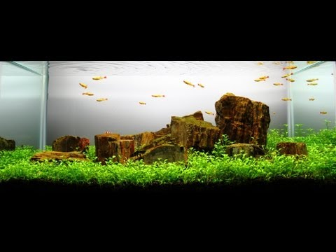 Freshwater Planted Aquarium - Cloud Mountain