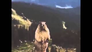 getlinkyoutube.com-Screaming Beaver/Marmot LOL!