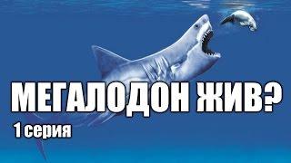 getlinkyoutube.com-Мегалодон - акула, которая еще жива? (1 серия) | Интересные факты