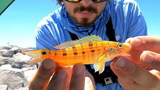 getlinkyoutube.com-EASY Way to Catch Saltwater Fish!!
