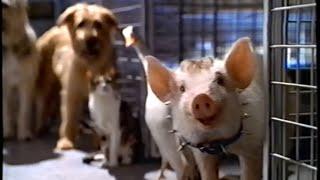 getlinkyoutube.com-Babe - Pig in the City (1998) Teaser (VHS Capture)