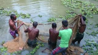 getlinkyoutube.com-Fishing in Bishwanath | Sylhet | Bangladesh