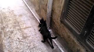 قطة سوداء المسكينة الطيبة .mp4