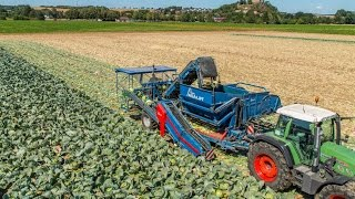 Grimme ASA-LIFT TK 150 B | Cabbage Harvester | 1-row & 5 ton bunker